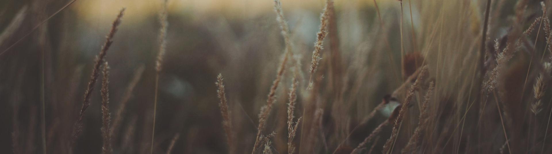 fields-pasek
